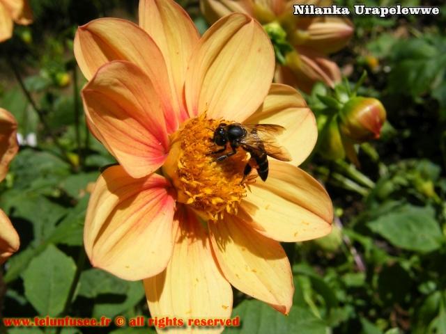 nilanka-urapelewwe-blog-voyage-srilanka-hakgala-garden-nuwara-eliya-travel-blog-telunfusee-5